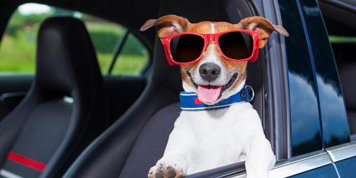 Transportieren Sie Ihr Haustier sicher in Ihrem Auto